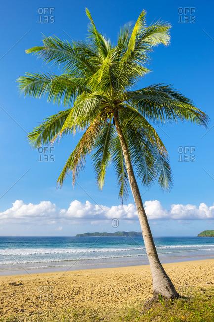 Palm tree on Nacpan Beach, El Nido, Palawan, Philippines