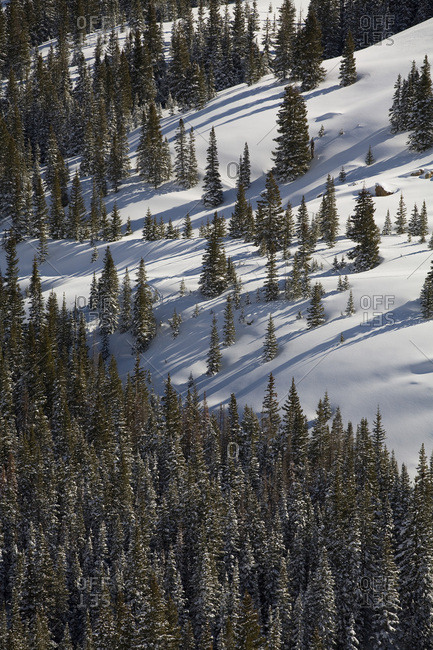 High mountain conifers dot the side of a snow-covered Colorado mountainside.