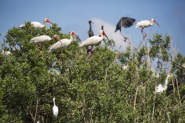 Birds perching on bush, Lake Charles, Louisiana, USA