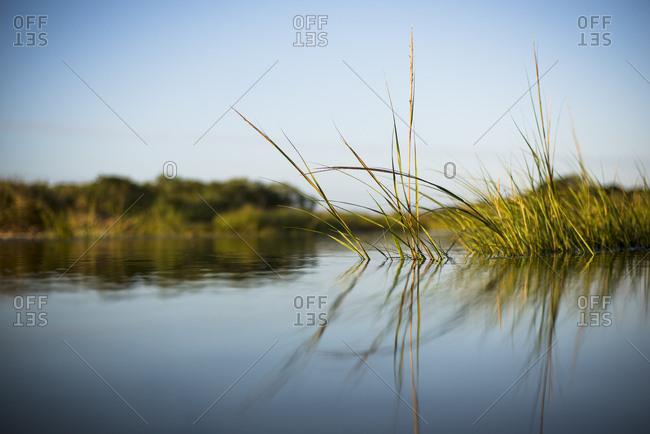 Marsh scenery under clear sky, Nantucket, Massachusetts, USA