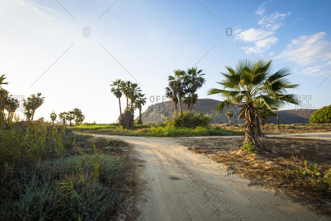 Palm trees and dirt road, El Pescadero, Baja California Sur, Mexico