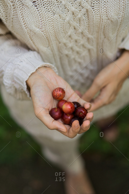 Woman holding handful of cherry plums