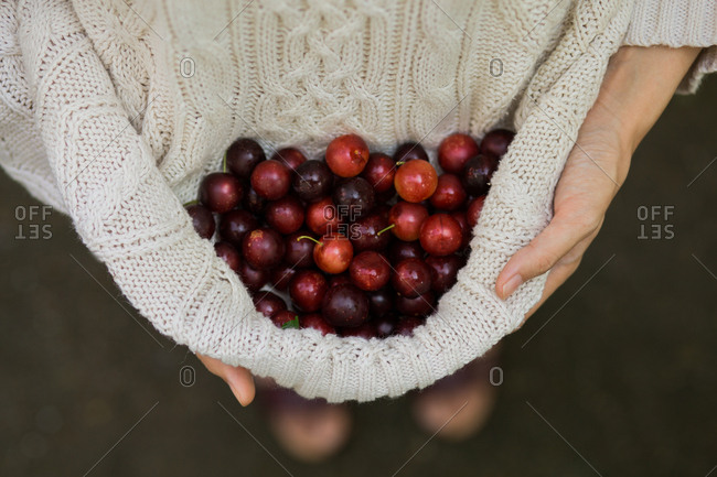 Woman holding cherry plums in her sweater