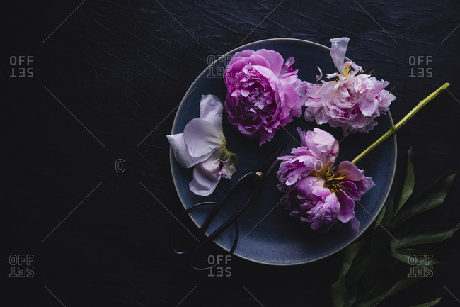 Overhead shot of peony flowers on a blue ceramic plate