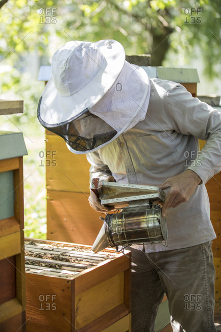 Beekeeper checking honeycomb with honeybees- using smoker
