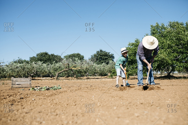 Grandfather and grandson plowing the ground