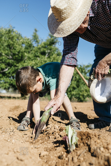 Grandfather and grandson planting vegetables in the field