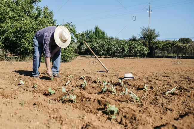 Senior farmer planting vegetables in the garden