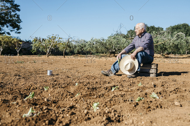 Senior farmer sitting on wooden box- after planting vegetables in the garden