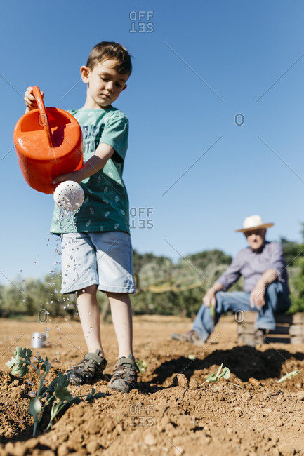 Grandfather and grandson watering freshly planted vegetables