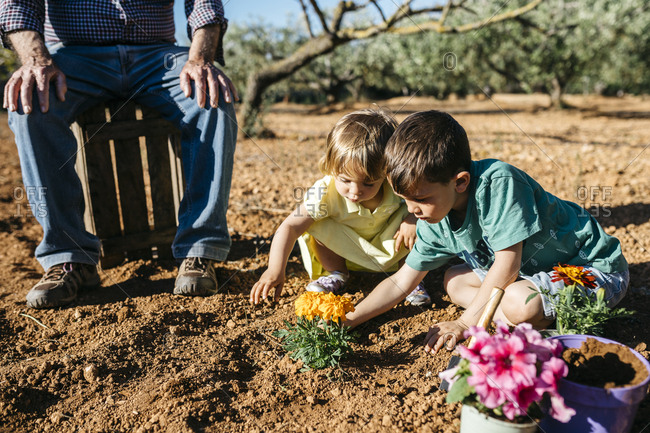 Grandfather and grandchildren planting a flower in the garden