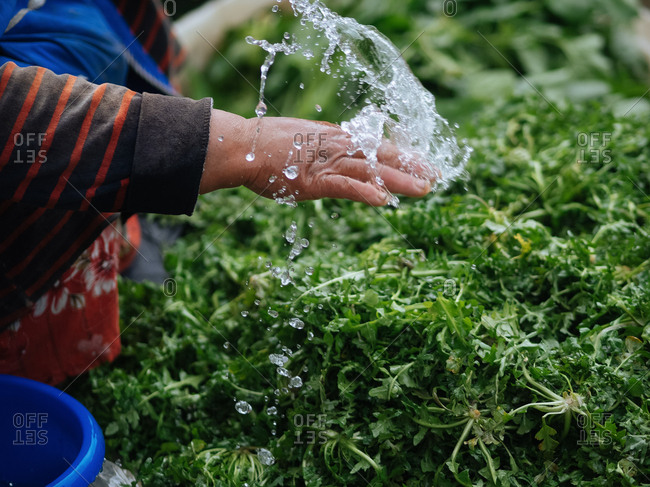 Hand splashing water on green leafy vegetables