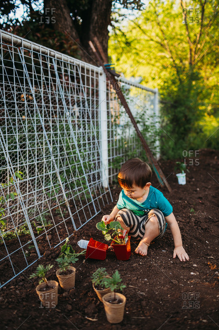 Little boy looking at young plants in garden