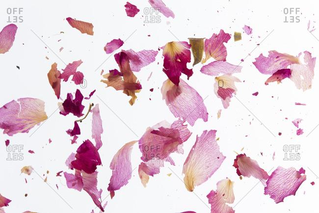 Broken pink petals