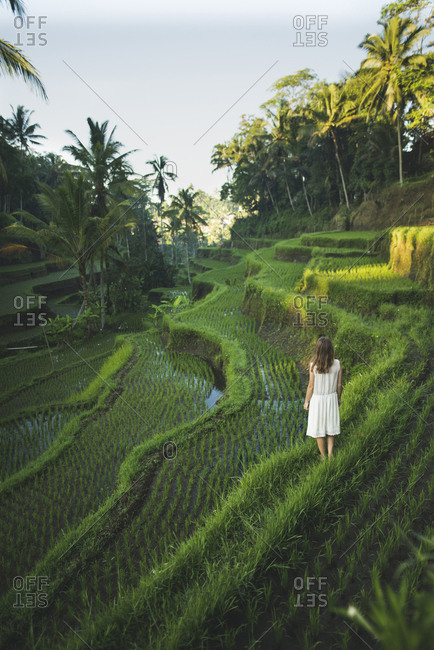 Woman wearing white dress on terraced rice paddies in Bali, Indonesia