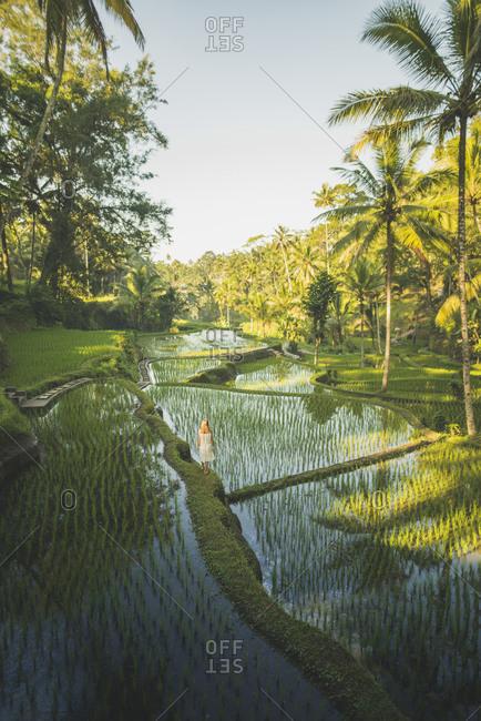 Woman on terraced rice paddies in Bali, Indonesia