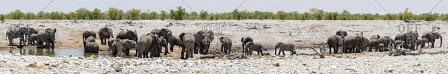Elephants in waterhole at Etosha National Park, Namibia, Africa