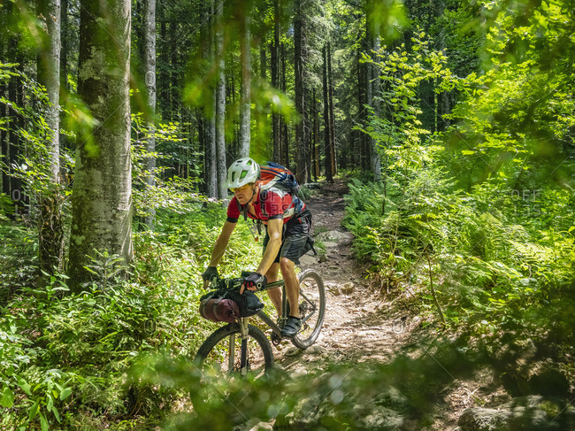 Mountain biker riding amidst woods of Black forest, Hinterzarten, Baden-W�rttemberg, Germany