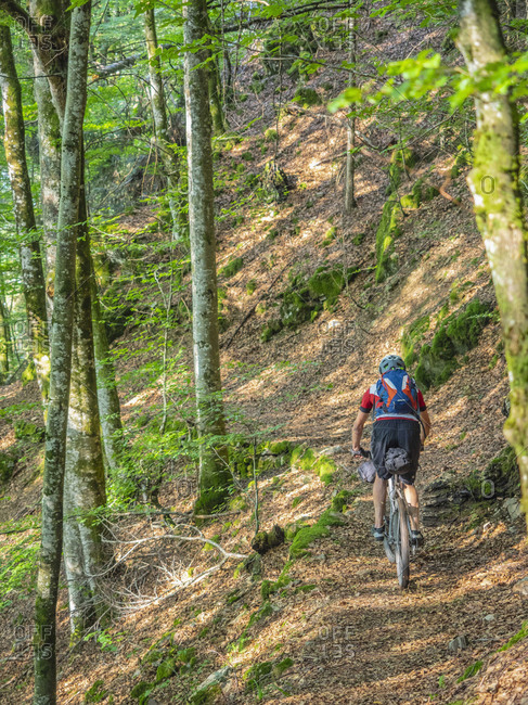 Mountain biker cycling through forest, near Todtnau, Baden-W�rttemberg, Germany