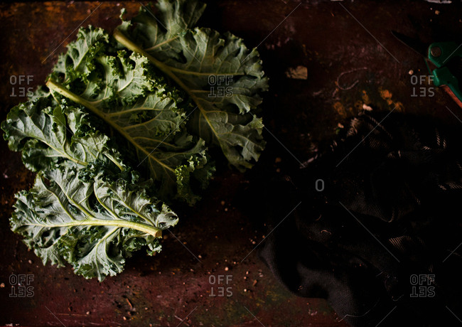 Overhead view of kale leaves on a soil surface