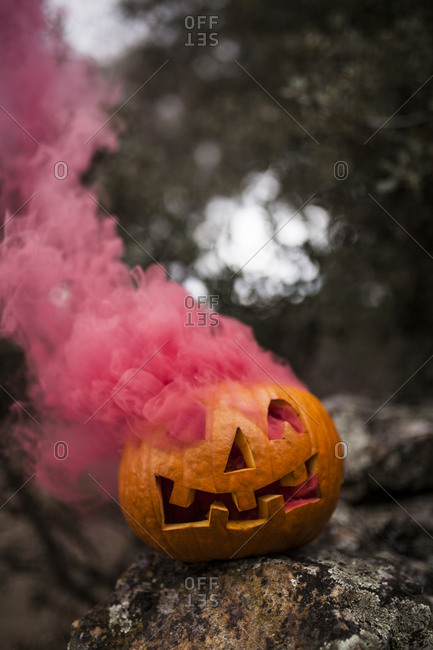 Pink colored smoke coming out a Halloween pumpkin placed on a stone fence in a oak forest