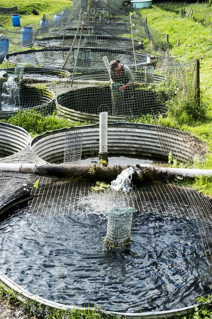 High angle view of man wearing waders working at a water tank at a fish farm raising trout.
