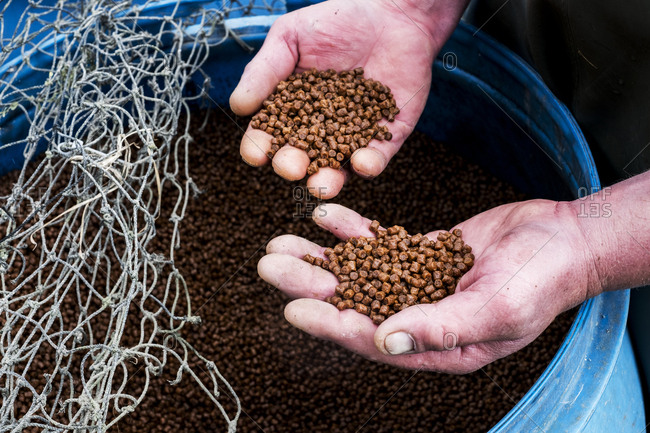 High angle close up of person holding heap of brown pellets, fish food at a fish farm raising trout.