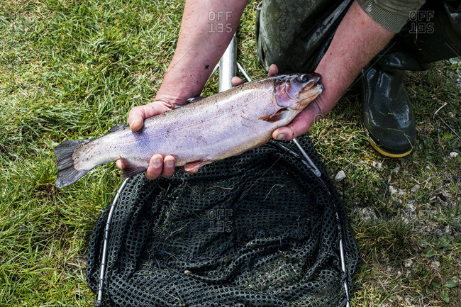 High angle close up of person holding freshly caught trout at a fish farm raising trout.