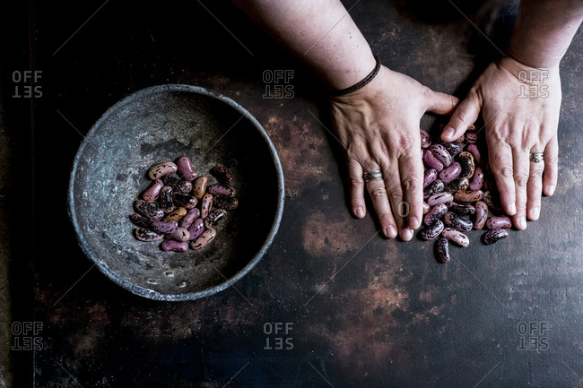 High angle close up of human hands holding grey metal bowl with purple speckled beans.
