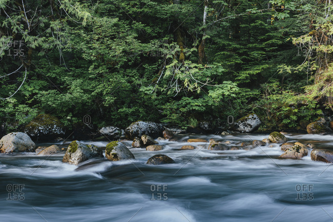SRiver flowing through lush, temperate rainforest