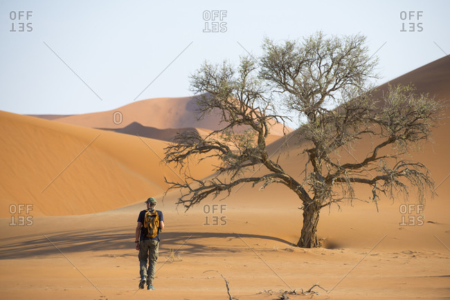 Deadvlei, Namibia - October 9, 2015: Rear view of man exploring the Namib desert dunes near Sossusvlei and Deadvlei