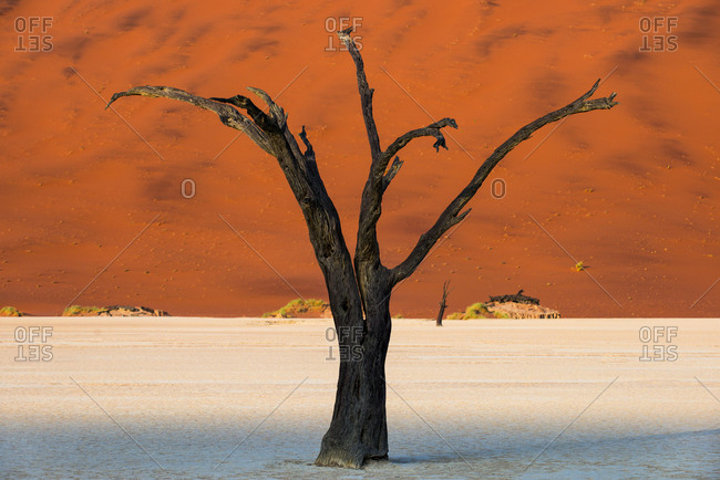 Dead Acacia tree silhouetted against sand dunes at Deadvlei in Namibia