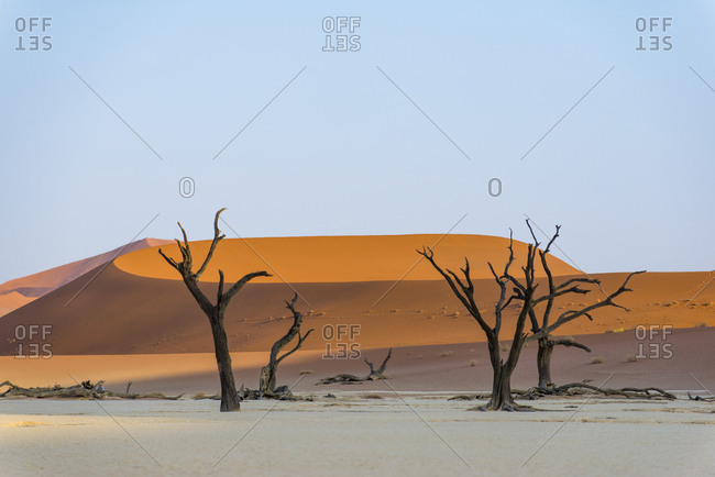 Dead Acacia trees and sand dunes at Deadvlei in Namibia