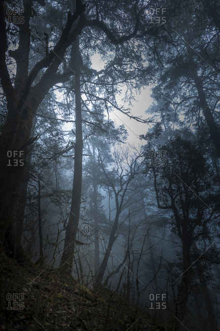 A murky and misty forest in the Gosainkund region in the Himalayas