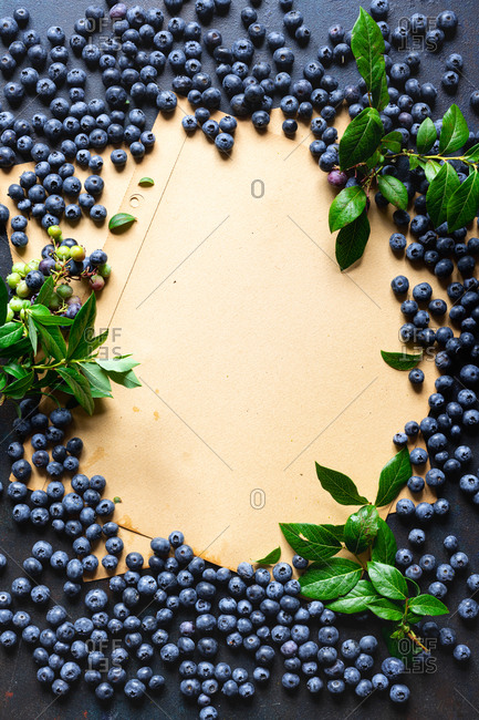 Freshly picked blueberries with leaves surrounding blank page