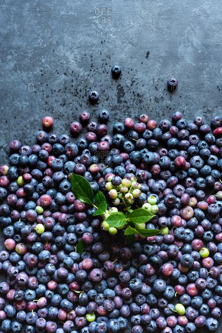 Fresh picked blueberries on dark background