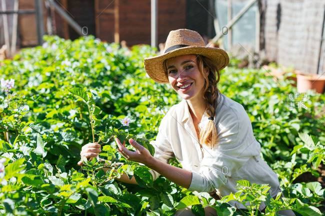 Caucasian woman collecting plants with a hat in an ecological garden.
