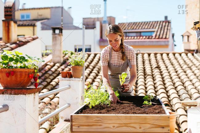 Caucasian woman planting in a urban garden.