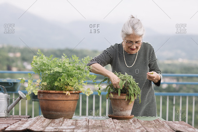 Senior woman with potted plants on her roof terrace- Belluno- Italy