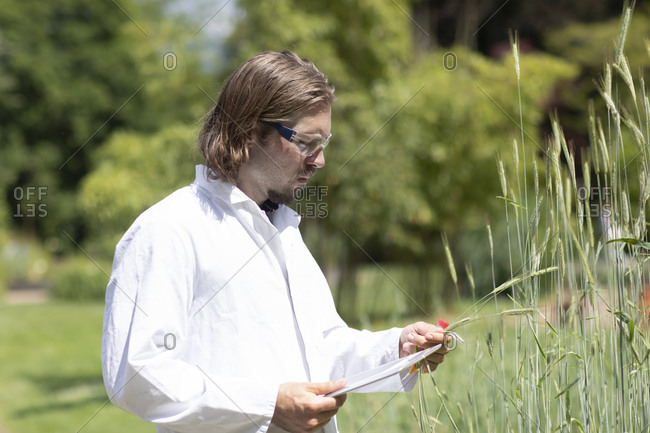 Researcher in a laboratory coat examining plants outside