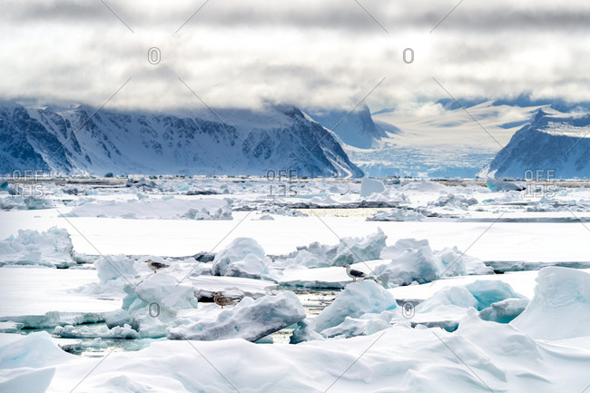 Pack ice in the arctic circle at 80 degrees north.
