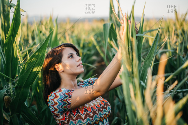 Young woman checking out on a leaves of corn in a cornfield