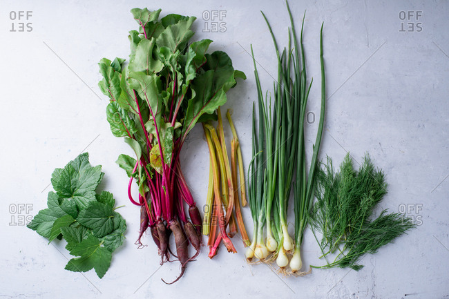 Fresh vegetables from the farm - beets, rhubarb and onions with dill and blackcurrant leaves