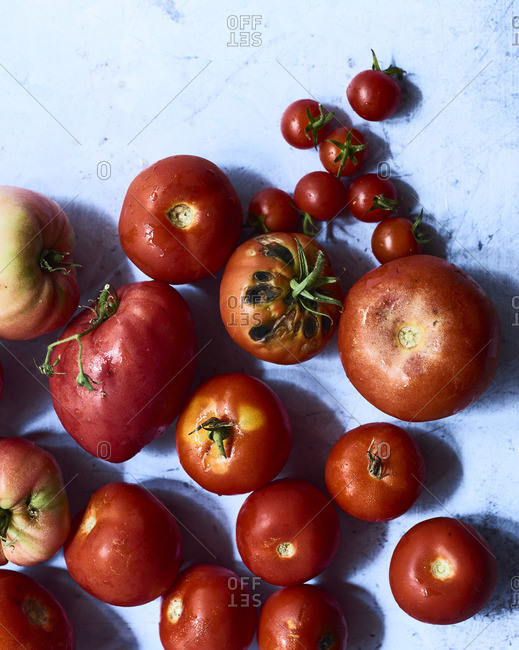 Various freshly harvested tomatoes (seen from above)