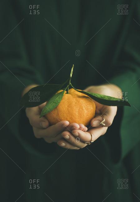 Fresh raw tangerine citrus fruit in hands