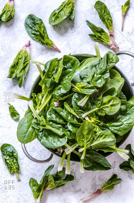 Young leaves of spinach in a metal bowl on a concrete background