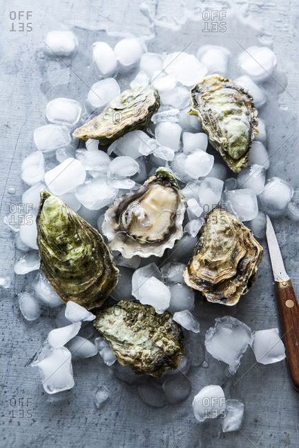 Fresh oysters with ice cubes and a knife