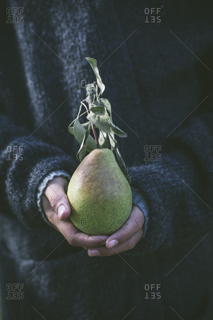 Hands holding a pear