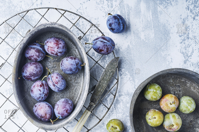 Still Life of plums Reine Claude and Bleue de Belgique