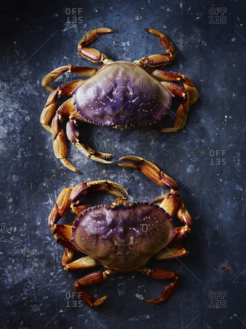 Two crabs on a black background